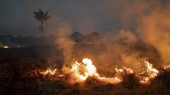 g7 incendio amazonas-moore stephens